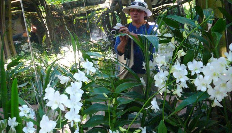 Garden_Orchids_vistavka_2