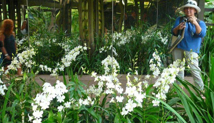 Garden_Orchids_vistavka_3