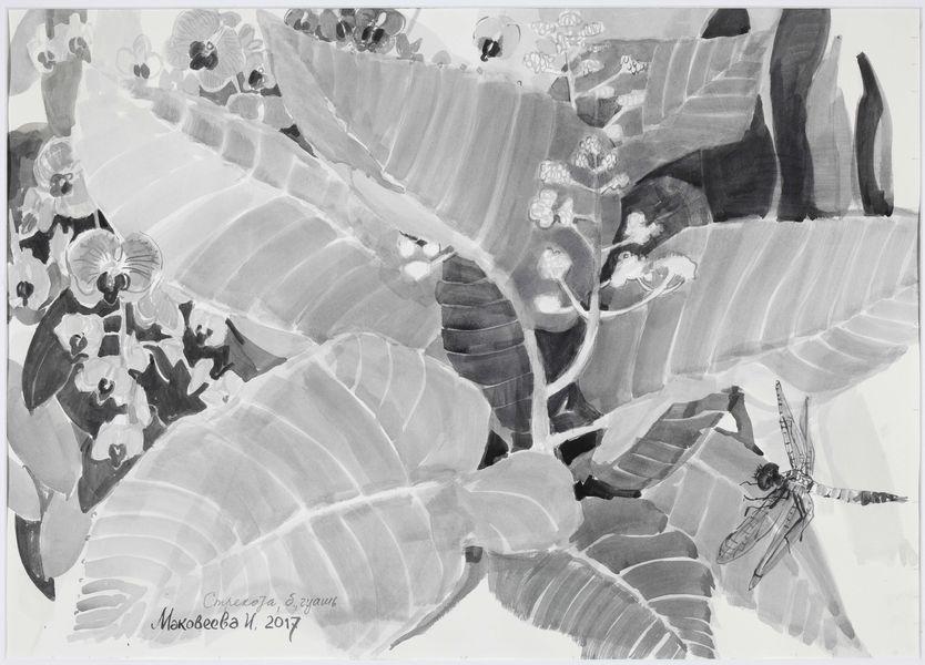 Выставка графики Ирины Маковеевой «Сад орхидей»